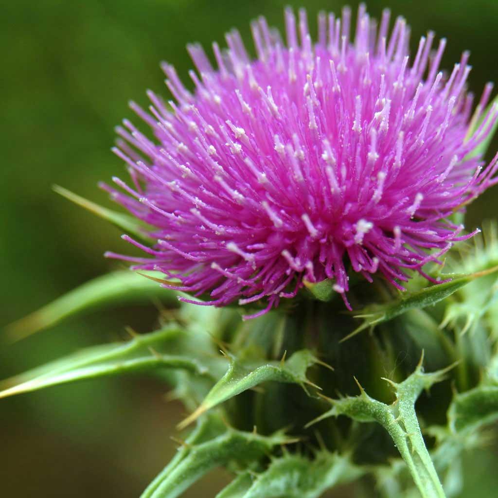 Botanical & Herb